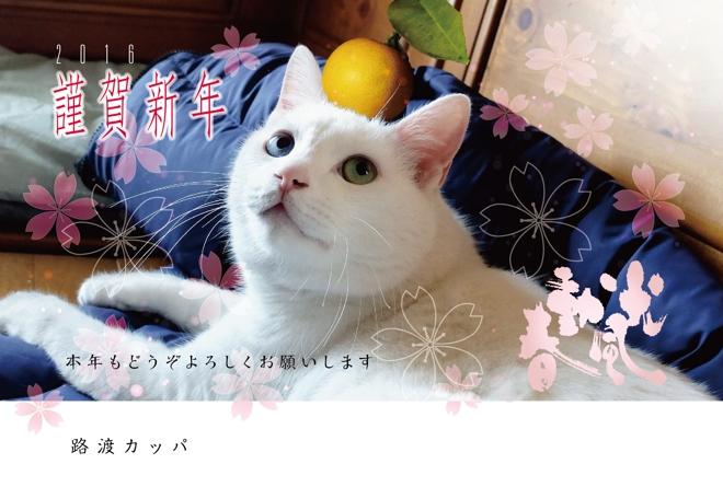 2016年賀neko-01.jpg